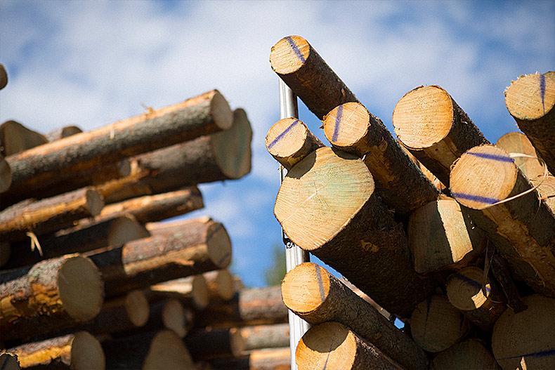 Tukkitili kasvattaa metsätuloasi vielä puukauppojen jälkeenkin.
