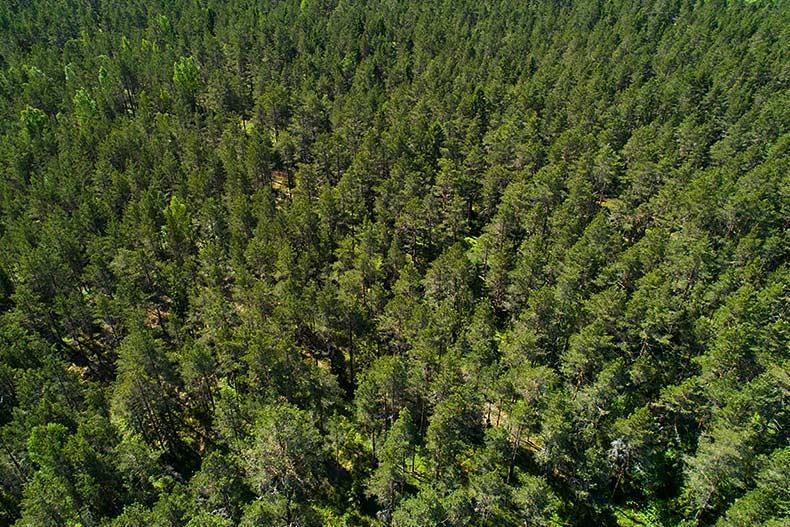 Rekisteröi metsäsi, niin helpotat puukauppoja.