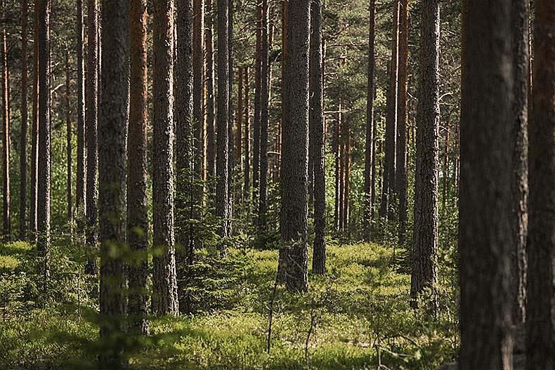 Westas tarjoaa metsänomistajille monipuolisia palveluja, jotka varmistavat, että metsä tuottaa jatkossakin tuloja.