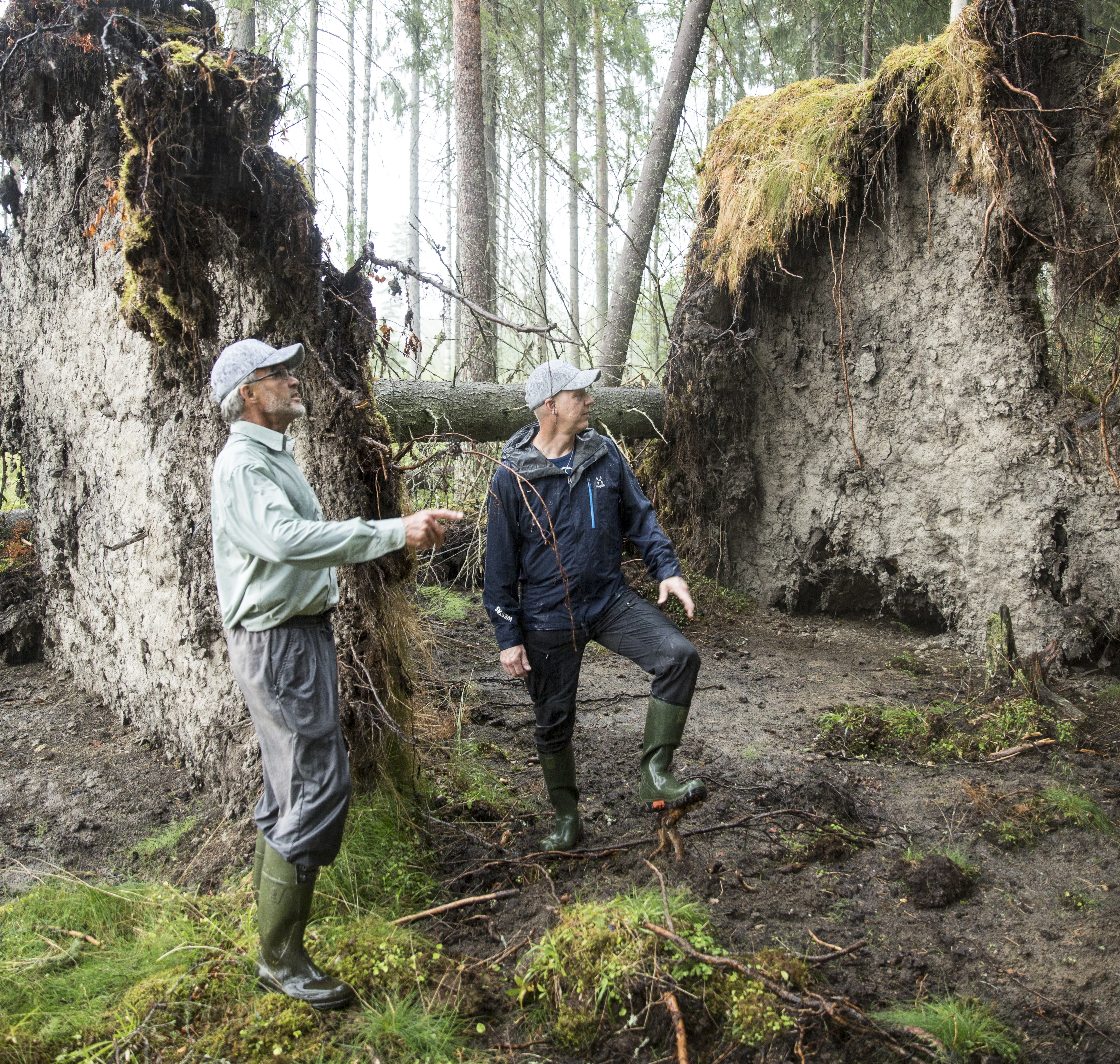 Forest Management – Doing it all, even the worrying